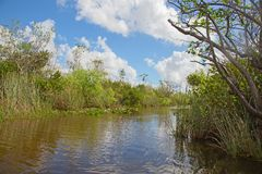 everglades photographie stock