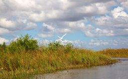 everglades photos stock