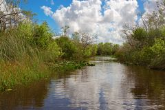 everglades photos libres de droits