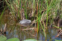 everglades images libres de droits