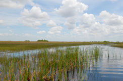 Everglades. Miami Everglades on a clear sunny day stock photography