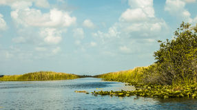 Everglades - Miami Royalty Free Stock Image