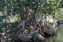 Everglades Nationaal Park Florida Royalty-vrije Stock Foto's