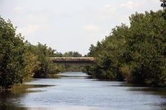 Everglades Nationaal Park Florida Royalty-vrije Stock Afbeeldingen