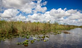 everglades stock fotografie