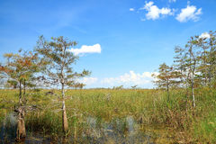 Everglades National Park Royalty Free Stock Photo