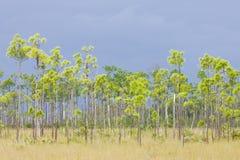 Everglades National Park Stock Images