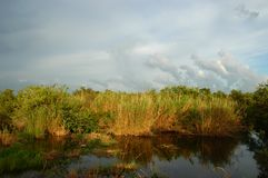 Everglades National park. Florida wetlands Royalty Free Stock Image