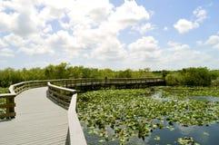 Everglades National Park. Anhinga Trail through the Everglades National Park in Florida Stock Photo