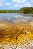 Everglades National Park Eco Pond Stock Photography