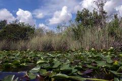 Everglades National Park in Florida Stock Photos