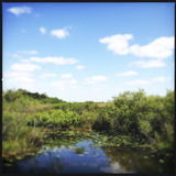 Everglades National Park in Florida Stock Image