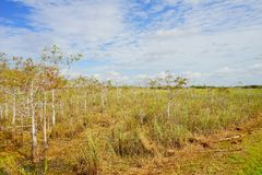 Everglades national park landscape. Landscape of everglades national park, Florida, USA stock photo