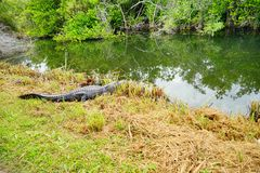 Everglades national park landscape stock photos