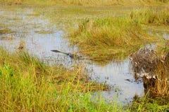 Everglades national park landscape. Landscape of everglades national park, Florida, USA stock image