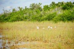 Everglades national park landscape. Landscape of everglades national park, Florida, USA royalty free stock images