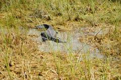 Everglades national park landscape. Landscape of everglades national park, Florida, USA stock images