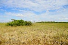 Everglades national park landscape. Landscape of everglades national park, Florida, USA stock photos