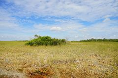 Everglades national park landscape. Landscape of everglades national park, Florida, USA royalty free stock photography