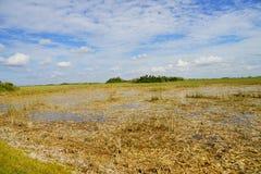 Everglades national park landscape. Landscape of everglades national park, Florida, USA royalty free stock photos