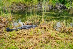Everglades national park landscape royalty free stock image