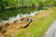 Everglades national park landscape stock image