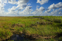 Everglades National Park Royalty Free Stock Photography