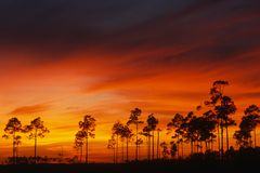 Everglades National Park at twilight royalty free stock photos