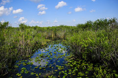 Everglades-Nationalpark lizenzfreies stockbild
