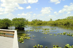 Everglades-Nationalpark stockbilder