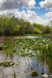 everglades stockbilder