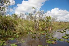 everglades stockbild