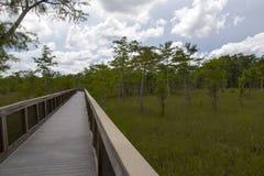 Everglades. Photo of the Everglades Florida stock photo