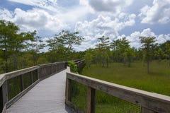 Everglades. Photo of the Everglades Florida royalty free stock photos