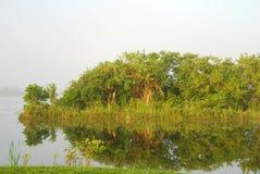 Everglades scenery Stock Photos