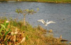 Everglades scenery Stock Image