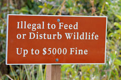 Everglades sign. Warning sign at anhinga trail in the florida everglades saying illegal to feed or disturb wildlife up to $5000 fine Royalty Free Stock Photography