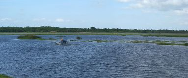 Everglades som är breda med airboaten arkivbild