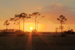 Everglades Sunset. Sunset in Big Cypress National Preserve, Florida Everglades royalty free stock photography
