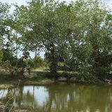 Everglades Swam Lands In Everglades Florida. Looking for Gators at the Everglades Swam Lands In Everglades Florida stock photos