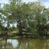 Everglades Swamp Lands In Everglades Florida. Sunshine abounds Everglades Swamp Lands In Everglades Florida royalty free stock images