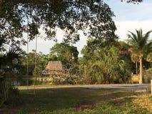 Everglades Swamp Lands In Everglades Florida. Sunshine abounds Everglades Swamp Lands In Everglades Florida stock image