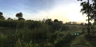 Everglades Swamp Lands In Everglades Florida. Sunshine abounds Everglades Swamp Lands In Everglades Florida royalty free stock image