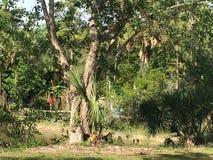 Everglades Swamp Lands In Everglades Florida. Sunshine abounds Everglades Swamp Lands In Everglades Florida stock photography
