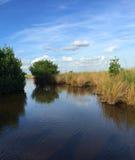 Everglades Swamp Scene Royalty Free Stock Image