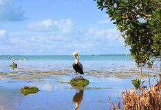 Everglades swamps Stock Images