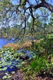 Everglades Stock Photo