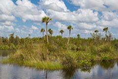 The Everglades. View over the divers vegetation of the Everglades National Park, Florida, USA Royalty Free Stock Photo
