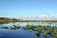 Everglades Wetland Stock Photo