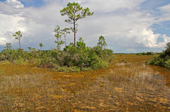 Everglades Wetlands Stock Photo